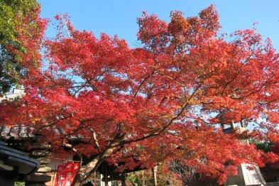 rojo otoño que te quiero yo...